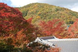 秋の京都、紅葉の名所を巡る旅
