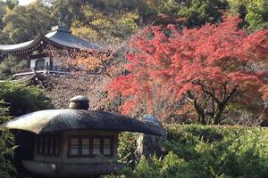 勧修寺の紅葉特集 ~平安の空気を感じる静かな紅葉の地|MKタクシー