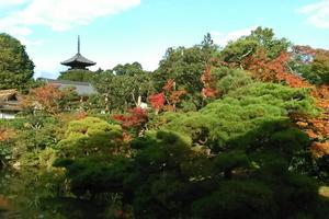 仁和寺御殿の紅葉特集 ~五重塔を借景にした紅葉の名庭|MKタクシー