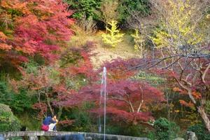 三宅八幡宮の紅葉特集 ~噴水と紅葉|MKタクシー