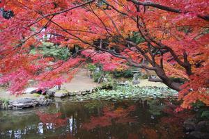金戒光明寺の紅葉特集 ~秋だけ特別公開される紅葉の名庭「紫雲の庭」|MKタクシー