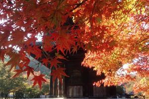 南禅寺の紅葉特集 ~巨大な三門とレトロな水路閣|MKタクシー