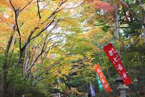 赤山禅院の紅葉特集 ~1ヶ月にわたって「もみじ祭」開催|MKタクシー