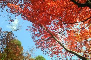 しょうざんの紅葉特集 ~甲子園3個分の広大な池泉回遊式庭園|MKタクシー