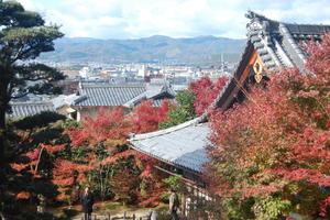 金福寺の紅葉特集 ~手前に紅葉と本堂、奥に京都の町並の絶景|MKタクシー