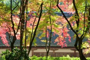 上賀茂神社/大田神社の紅葉特集 ~「渉渓園」「ならの小川」は京都屈指|MKタクシー