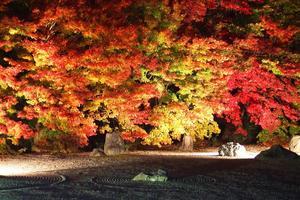 実相院門跡/妙満寺の紅葉特集 ~一度は見るべき「床紅葉」|MKタクシー