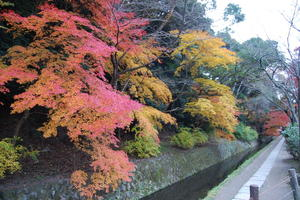 哲学の道/若王子神社の紅葉特集 ~紅葉スポットをつなぐ散策路|MKタクシー