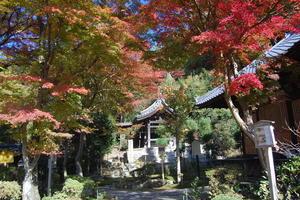 清閑寺の紅葉特集 ~清水寺南門からわずか5分の閑静な紅葉スポット|MKタクシー