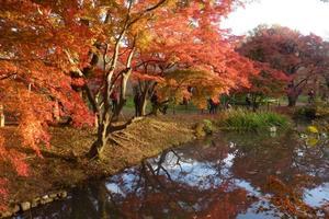 府立植物園の紅葉特集 ~紅葉はもちろん黄葉や褐葉も見られる植物の宝庫|MKタクシー