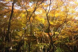祇王寺の紅葉特集 ~苔の絨毯を覆う色とりどりの散紅葉|MKタクシー
