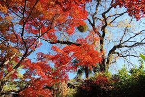 萬福寺の紅葉特集 ~中国っぽい景色のなかで見る日本の紅葉|MKタクシー