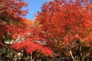 勝持寺の紅葉特集 ~花より紅葉の方がお勧めの「花の寺」|MKタクシー