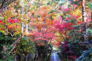 鹿王院の紅葉特集 ~艶やかな紅葉で彩られる石畳の参道|MKタクシー