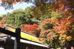 嵯峨鳥居本の紅葉特集 ~重伝建地区の町並を彩る紅葉|MKタクシー