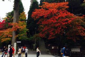 比叡山延暦寺の紅葉特集 ~市内で最も早く色づく紅葉スポット|MKタクシー
