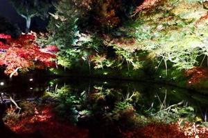 高台寺の紅葉特集 ~京都のライトアップはここが発祥|MKタクシー