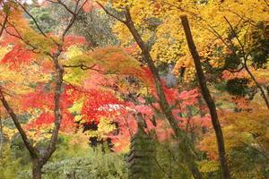常寂光寺の紅葉特集 ~見上げたり見下ろしたりいろんな紅葉が楽しめる|MKタクシー
