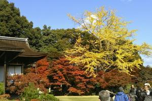 大河内山荘の紅葉情報 ~京都を大胆に取り込んだ雄大な庭園|MKタクシー