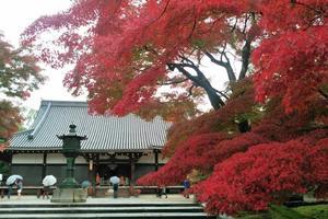 仁和寺の紅葉特集 ~桜だけじゃない、秋こそお勧めしたい|MKタクシー