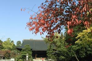 広隆寺の紅葉特集 ~霊宝殿は仏像だけではなく前庭も美しい|MKタクシー