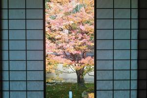雲龍院/来迎院の紅葉特集 ~障子によって一幅の掛け軸のように見える庭園|MKタクシー