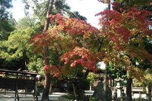 今宮神社/大徳寺の紅葉特集 ~あぶり餅を食べて紅葉狩り|MKタクシー
