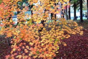 南禅寺の紅葉の点描【南禅寺】