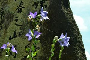 旧山城町探訪【下】 ~上狛/茶問屋/環濠集落