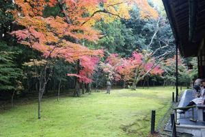 高桐院の紅葉特集 ~来春の公開再開が待ち遠しい紅葉の名庭|MKタクシー