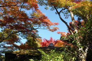 光悦寺の紅葉特集 ~紅葉のトンネルと借景庭園|MKタクシー