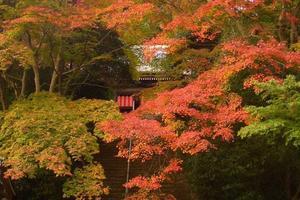 金蔵寺の紅葉特集 ~紅葉の穴場として必ず挙がる奥深い山寺|MKタクシー