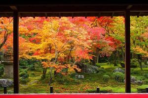 圓光寺の紅葉特集 ~まるで絵画のような十牛之庭の「額縁庭園」|MKタクシー