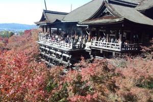 清水寺の紅葉特集 ~紅葉の真っ赤な海の彼方に京都市街の大展望|MKタクシー