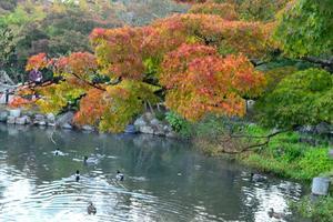 円山公園の紅葉特集 ~モミジにサクラにメタセコイアが彩る小川治兵衛の庭|MKタクシー