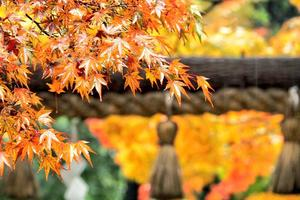 野宮神社の紅葉特集 ~竹林にたたずむ苔と紅葉の寺|MKタクシー
