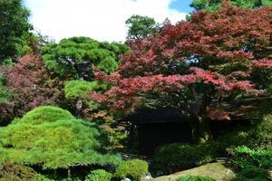 京都御所/仙洞御所の紅葉特集 ~日本の美がつまった池泉庭園。当日参観がお勧め|MKタクシー