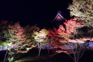 妙覚寺の紅葉特集 ~ベテランが勧める「内緒にしておきたい秘密の穴場」|MKタクシー