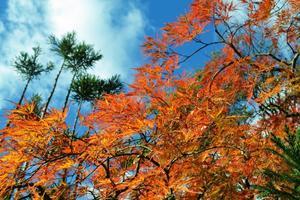 松花堂庭園/宝青庵の紅葉特集 ~いろんな庭園を愛でつつ紅葉狩り|MKタクシー
