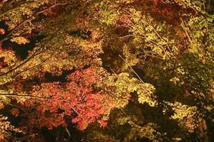 青龍殿/青蓮院の紅葉特集 ~紅葉も夜景も楽しめる大展望のスポット|MKタクシー