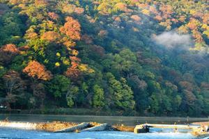 嵐山の紅葉特集 ~山全体が赤、オレンジ、黄、緑で錦のように彩られる|MKタクシー