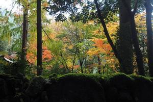 高山寺の紅葉特集 ~頭上を覆う紅葉と石畳を赤く染める散紅葉|MKタクシー