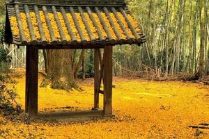 観音寺(山崎聖天)の紅葉特集 ~敷き詰められた黄色の絨毯|MKタクシー