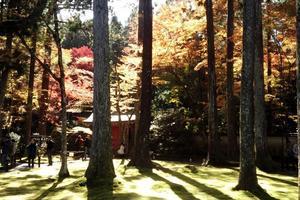 三千院の紅葉特集 ~紅葉と苔と杉木立が生み出す奇跡の景色|MKタクシー