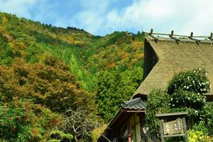 美山かやぶきの里/芦生の紅葉特集 ~茅葺に原生林に渓谷美ともりだくさん|MKタクシー