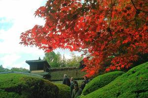 詩仙堂の紅葉特集 ~僧都の音が鳴り響く紅葉の名庭|MKタクシー