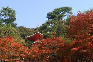 今熊野観音寺の紅葉特集 ~色とりどりの錦繍に彩られる境内|MKタクシー