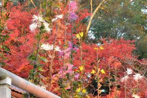 大覚寺/大沢池の紅葉特集 ~水面に映る紅葉が美しい|MKタクシー