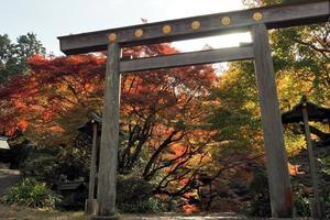 日向大神宮の紅葉特集 ~石段と鳥居と紅葉が作り出す絶景|MKタクシー