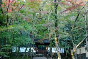 地蔵院(竹の寺)の紅葉特集 ~京都屈指の遅くまで紅葉を楽しめる寺院|MKタクシー